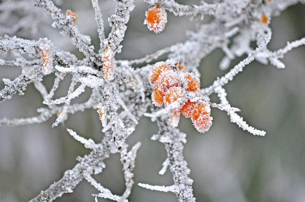 Winterimpressionen Rügen